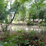 Photogragh of the pond at robert Ashton Memorial Park