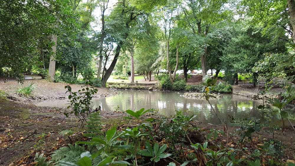 A view of the pond surrounded by trees